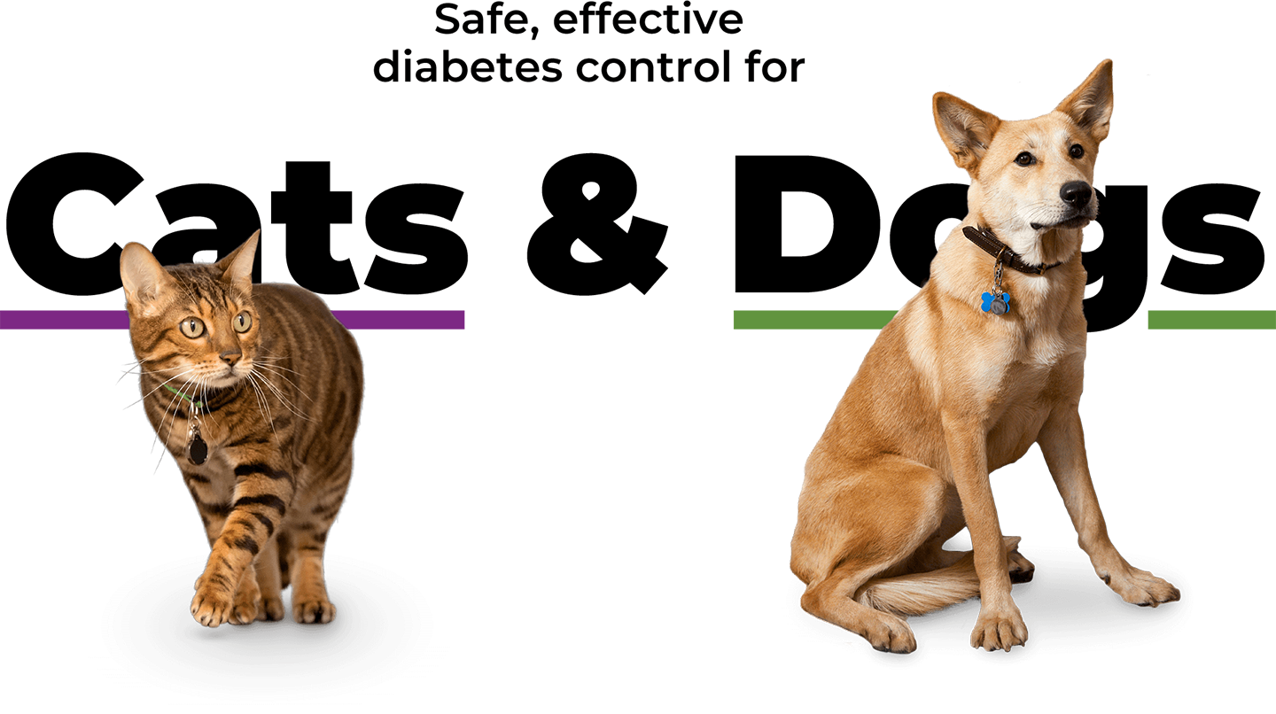 Prozinc Dog and Cat Banner