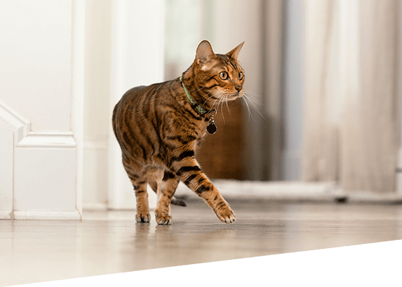 Managing Diabetes for Cats