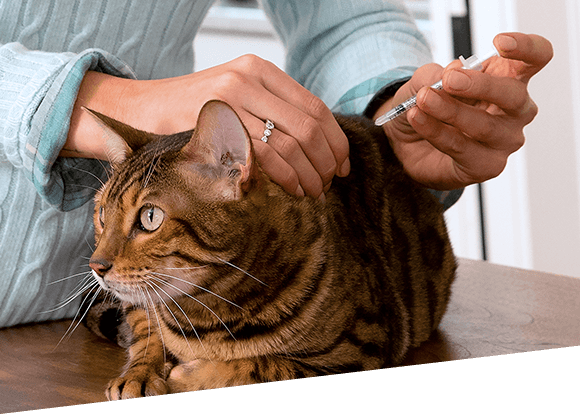 Treating Feline Diabetes
